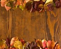Folhas da trepadeira do arvoredo sobre o fundo de madeira Foto de Stock Royalty Free