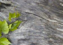 Folhas da uva em uma tabela Imagens de Stock Royalty Free