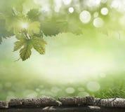 Folhas da uva no fundo foto de stock