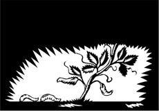 Folhas da videira que Morphing o bloco xilográfico das larvas ilustração do vetor