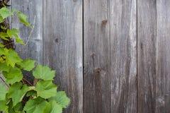 Folhas da vinha Imagens de Stock