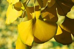 Folhas dadas forma borboleta Fotos de Stock Royalty Free