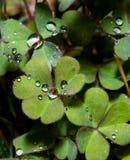 Folhas dadas forma coração com rasgos Imagens de Stock
