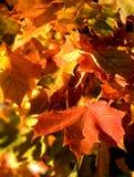 Folhas das árvores Imagem de Stock Royalty Free