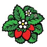 Folhas das morangos e das bagas ilustração royalty free