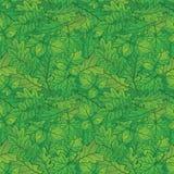 Folhas das plantas, sem emenda, verão Fotografia de Stock Royalty Free