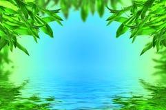 Folhas de акÑÑÑ no fundo azul Imagem de Stock Royalty Free