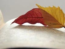 Folhas de Atumn no livro aberto Fotografia de Stock Royalty Free