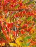 Folhas de Autmn Imagem de Stock