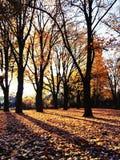 Folhas de Autmn com luz do sol Foto de Stock