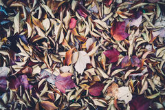 Folhas de Autum Foto de Stock