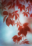 Folhas de Autumn Red no papel do vintage Fotografia de Stock