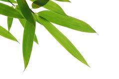 Folhas de bambu Imagens de Stock