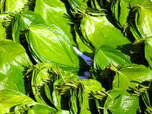 Folhas de Beetlenut Foto de Stock
