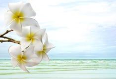 Folhas de Bodhi na água na praia Imagem de Stock Royalty Free