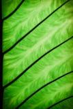 Folhas de Bonnie Imagens de Stock