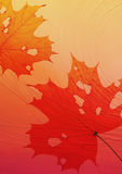 Folhas de bordo Imagens de Stock