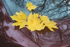 Folhas de bordo amarelas caídas no vidro e na capa do carro Foto de Stock Royalty Free