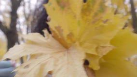 Folhas de bordo amarelas de coleta adolescentes pretas bonitas no ramalhete vídeos de arquivo