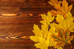 Folhas de bordo amarelas do outono na perspectiva de uma tabela de madeira velha Imagem de Stock Royalty Free