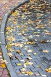 Folhas de bordo amarelas e vermelhas no pavimento molhado Fotos de Stock