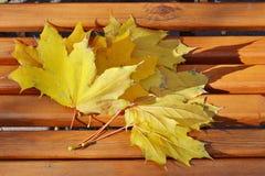 Folhas de bordo amarelas em um banco no parque imagem de stock