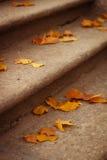 Folhas de bordo amarelas nas escadas Imagem de Stock