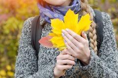 Folhas de bordo amarelas nas mãos fêmeas Close-up Fotografia de Stock