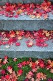 Folhas de bordo caídas na maneira das escadas Fotografia de Stock Royalty Free