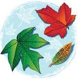 Folhas de bordo caídas outono ilustração royalty free