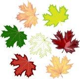Folhas de bordo coloridas do mosaico fácil alterar Fotografia de Stock