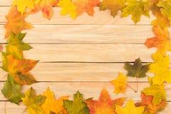 Folhas de bordo coloridas nas placas de madeira leves Fotografia de Stock