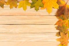 Folhas de bordo coloridas nas placas de madeira leves Fotografia de Stock Royalty Free