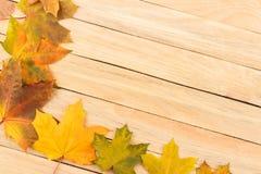 Folhas de bordo coloridas nas placas de madeira leves Imagens de Stock