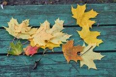 Folhas de bordo coloridas no outono em um banco colorido azul esverdeado no parque Foto de Stock Royalty Free