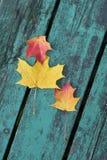 Folhas de bordo coloridas no outono em um banco colorido azul esverdeado no parque Imagens de Stock Royalty Free