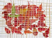 Folhas de bordo decorativas secas sob a grelha da palha Fotografia de Stock