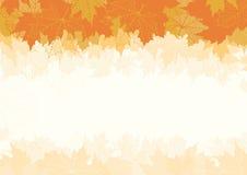 Folhas de bordo do outono Imagem de Stock Royalty Free