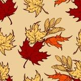 Folhas de bordo do outono e teste padrão sem emenda dos seads Imagem de Stock Royalty Free