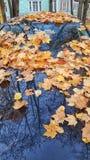 Folhas de bordo do outono na capa de um carro e da reflexão foto de stock