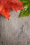 Folhas de bordo do outono na tabela de madeira Imagem de Stock