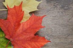 Folhas de bordo do outono na tabela de madeira Foto de Stock