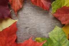 Folhas de bordo do outono na tabela de madeira Fotografia de Stock