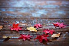 Folhas de bordo do outono no fundo de madeira foto de stock