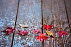 Folhas de bordo do outono no fundo de madeira fotografia de stock