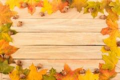 Folhas de bordo e bolotas coloridas nas placas de madeira leves Fotos de Stock Royalty Free