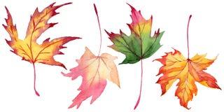 Folhas de bordo em um estilo da aquarela isoladas ilustração royalty free