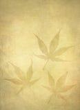 Folhas de bordo japonês do fundo Imagens de Stock Royalty Free