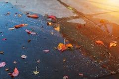 Folhas de bordo na estrada molhada fotos de stock royalty free