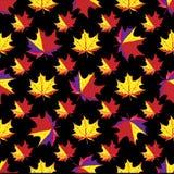 Folhas de bordo no fundo preto Fotos de Stock